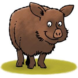 Happy boar – Blij zwijn