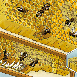 Bijenkorf – Beehive