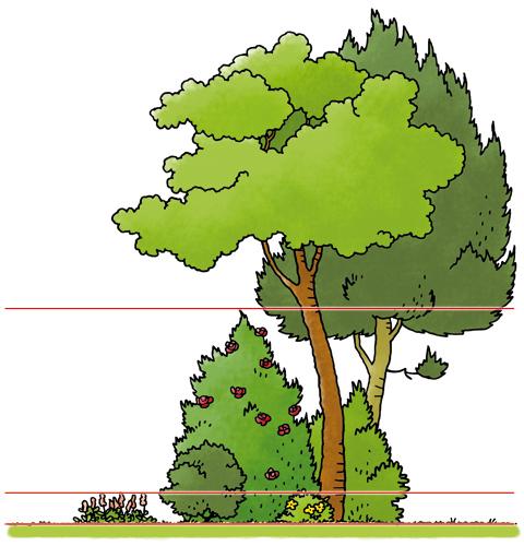 sporen_in_het_bos_03_vegetatielagen