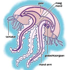 Kwal – Jellyfish